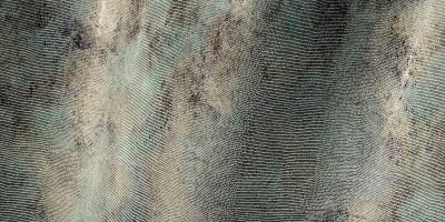 Lucertolina Eufemia
